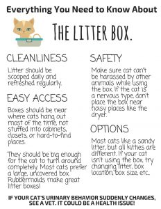 The Litter Box and You